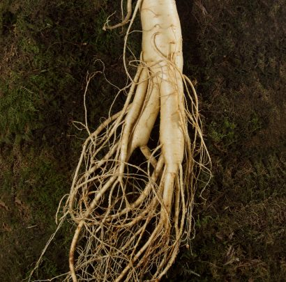 Image result for The Korea Ginseng Association
